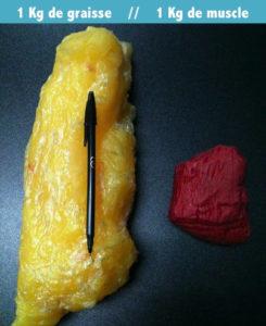 Peut-on transformer la graisse du ventre et des fesses en muscle ?