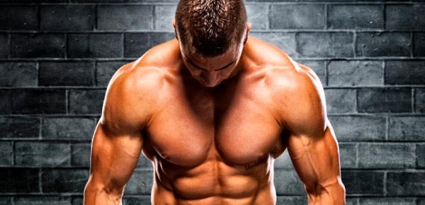 Les muscles de la